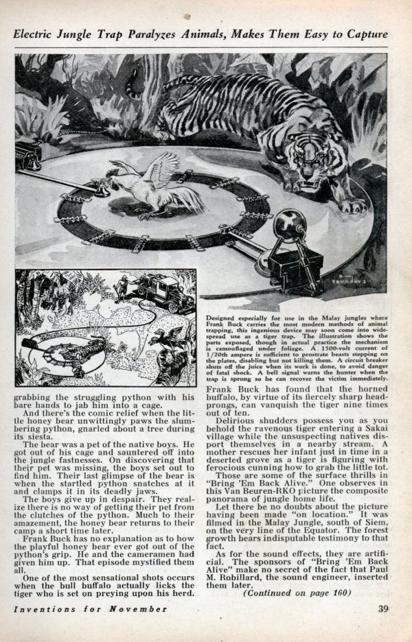 tiger_python_5