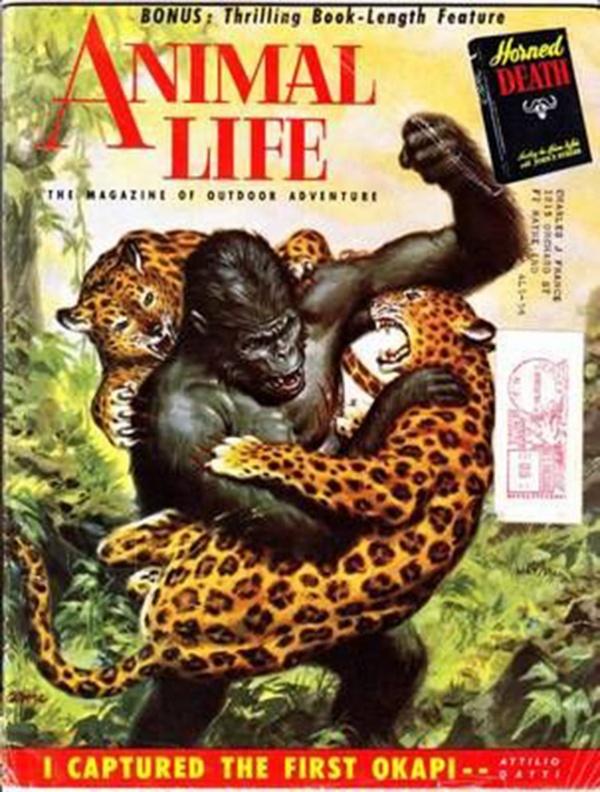 Animal Life May 1954