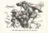 GoldenFleece-1939-02-p041 thumbnail