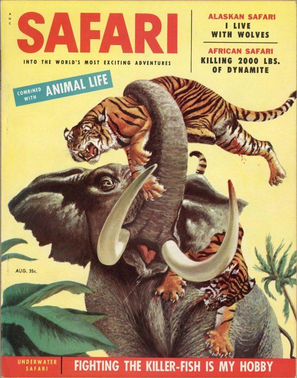 Safari August 1955